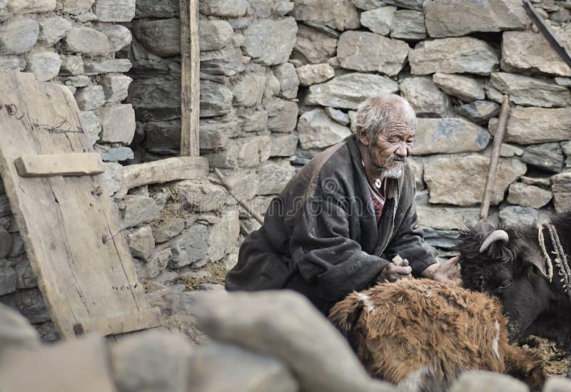 Altes Mangan vom korzok Dorfstand vor dem Haus und von der Sorgfalt für seine Kühe lizenzfreie stockfotos