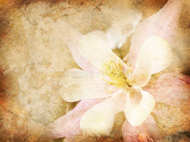 Altes Papier mit Blumenmuster lizenzfreie abbildung