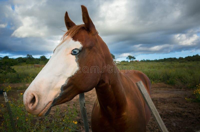 Altes Pferd auf einem Bauernhof stockfoto
