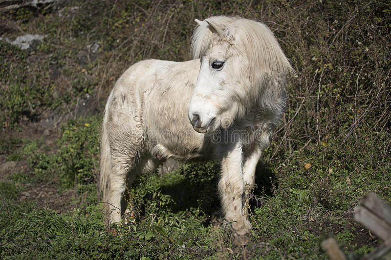 Altes Pony stockbilder