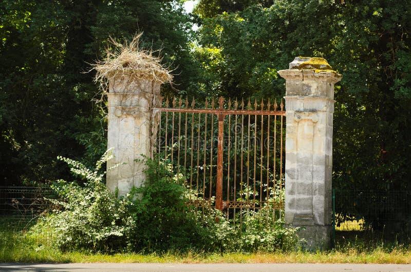 Altes Portal bedeckt mit Büschen stockbilder