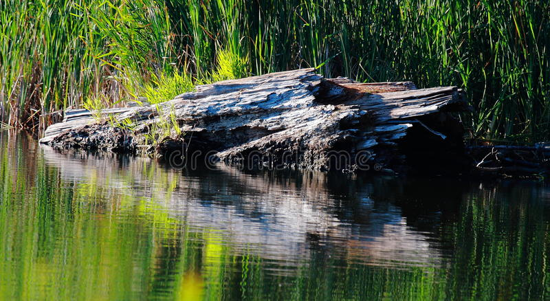Altes Protokoll nachgedacht über See stockfotos