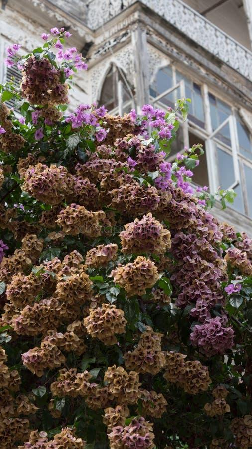 Altes Rahmen-Haus beim Blühen lizenzfreies stockfoto