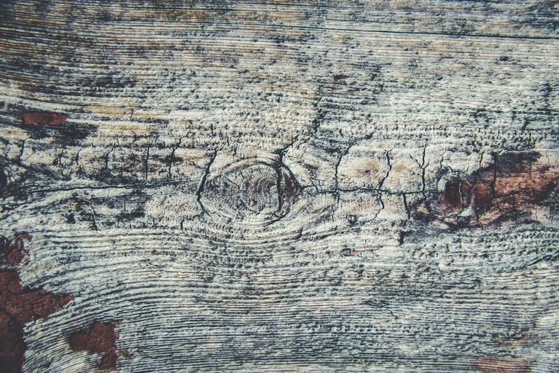 Altes rustikales Holz mit Form oder pilzartig auf Spitzenhintergrundbeschaffenheit lizenzfreie stockbilder