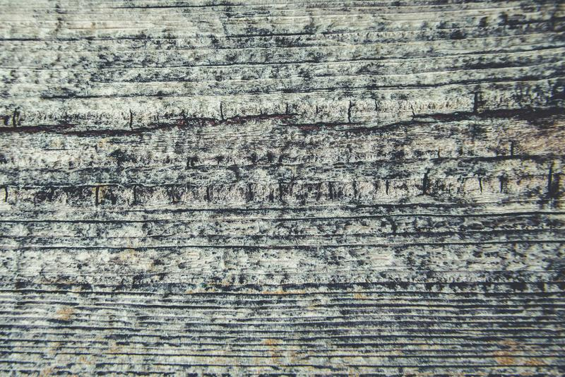 Altes rustikales Holz mit Form oder pilzartig auf Spitzenhintergrundbeschaffenheit lizenzfreie stockfotografie