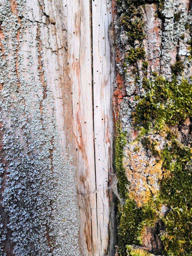 altes schönes strukturelles braunes Grau und grünes Moos lizenzfreies stockbild