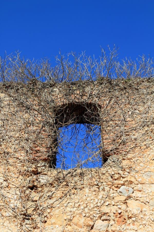 Altes Schlosswandfenster mit Anlagen stockfoto