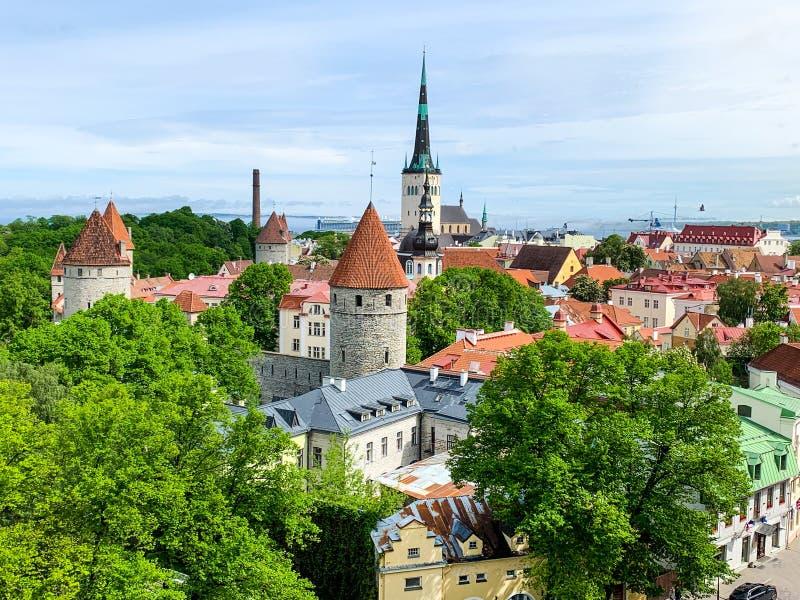 Altes Tallinn-Panorama, Estland gr?ne Zweige stockbilder