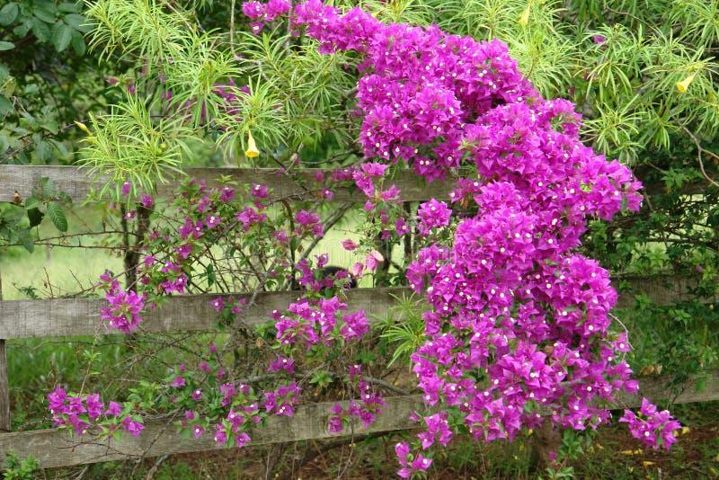 Altes Tor mit Blumen ramada stockfotos