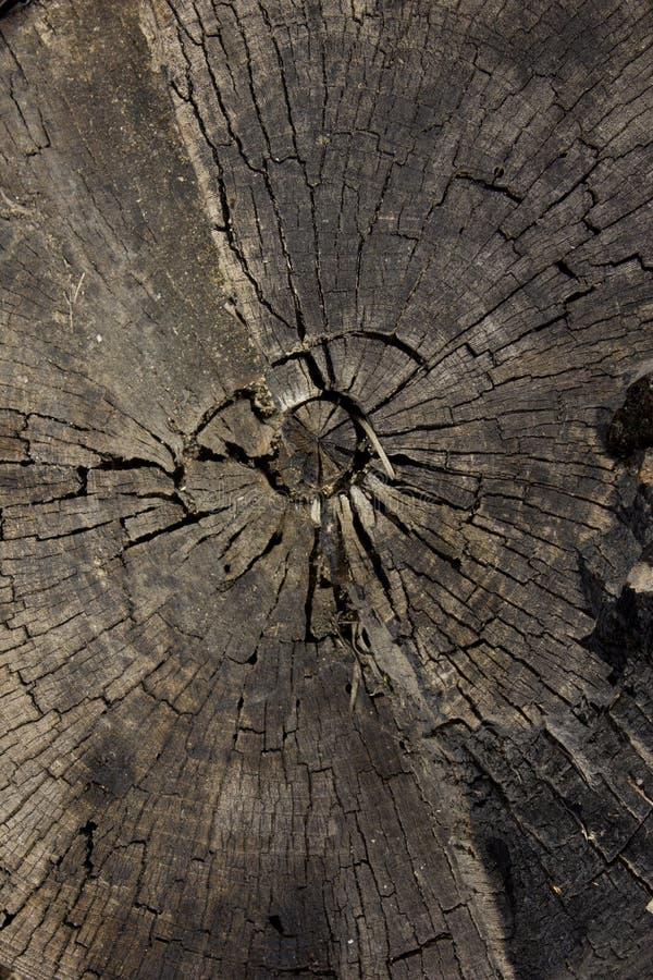 Altes totes Holz lizenzfreies stockfoto