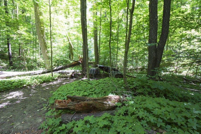 Altes verlassenes Auto im Wald lizenzfreies stockfoto