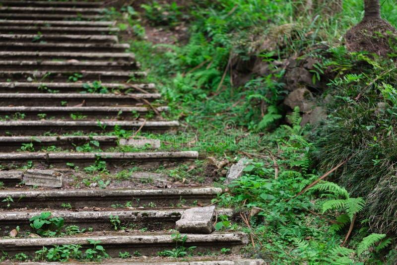 Altes verlassenes Treppenhaus im Park ist gehendes grünes lebendiges, in hohem Grade feucht im tropischen Klima lizenzfreie stockfotos