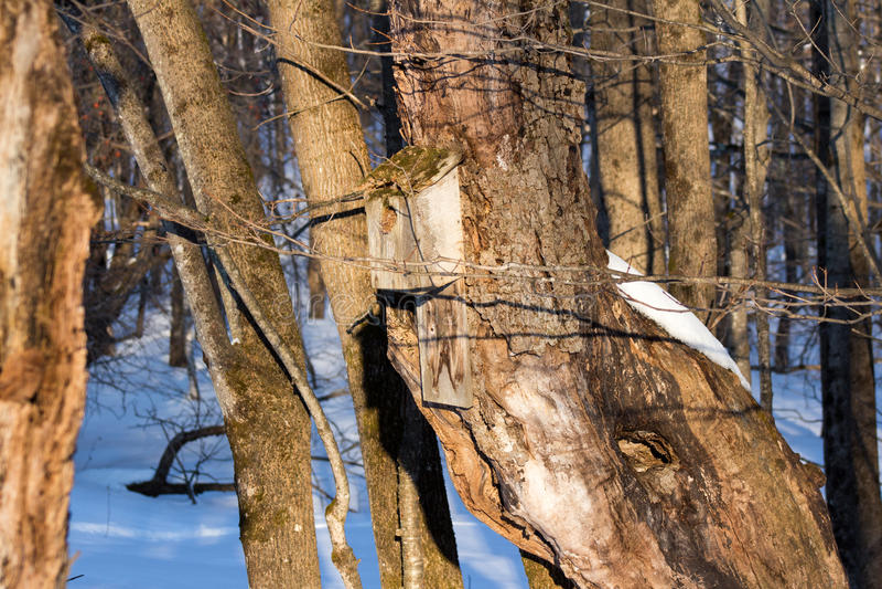 Altes Vogel-Haus auf altem Baum stockfoto
