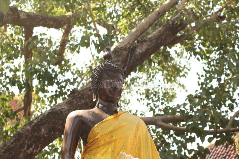 Altezza stante di Buddha fotografia stock libera da diritti