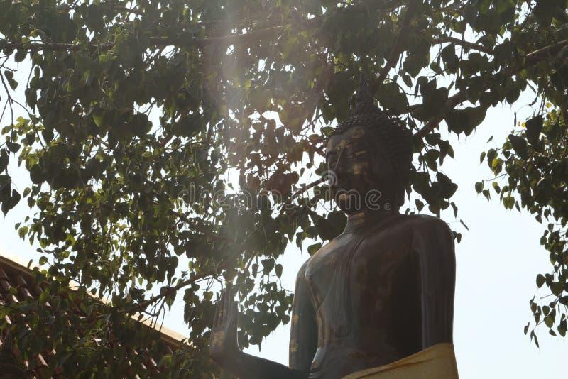 Altezza stante di Buddha fotografia stock