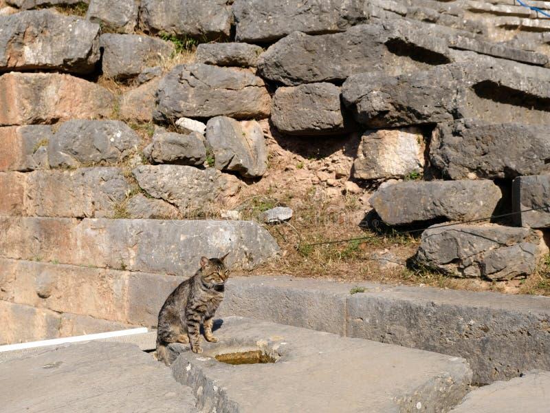 Altgriechische Steinwand und Grey Tabby Cat, Schongebiet von Apollo, Berg Parnassus, Griechenland stockfotos