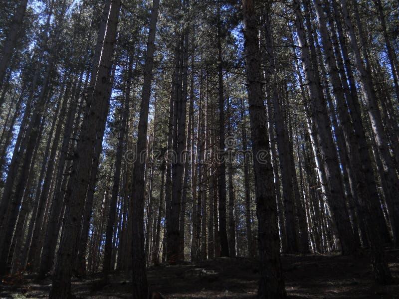 Alti alberi ed ombra fotografie stock
