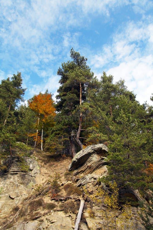 Altijdgroene bomen op steenachtige helling royalty-vrije stock foto's