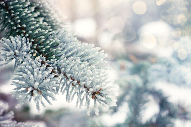 Altijdgroene de boomachtergrond van de winterkerstmis Het ijs behandelde blauwe nette tak dichte omhooggaand Vorsttak van spar me stock foto