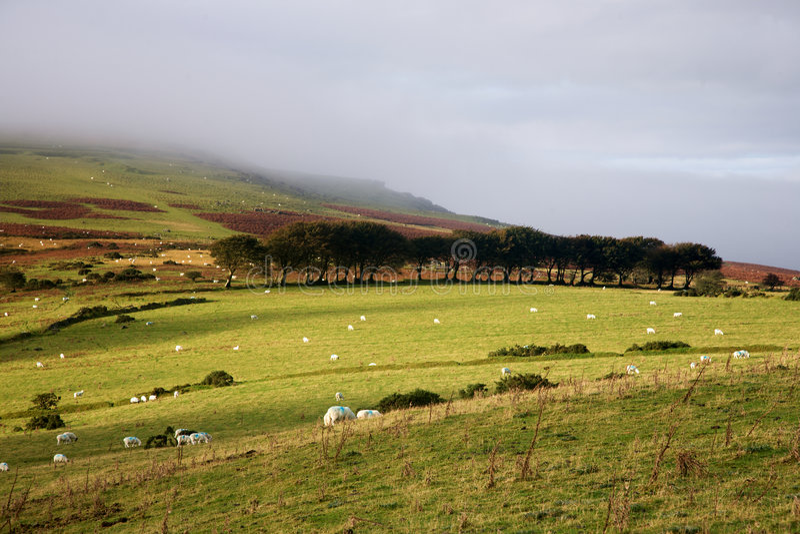 Altiplanicie de Dartmoor foto de archivo libre de regalías