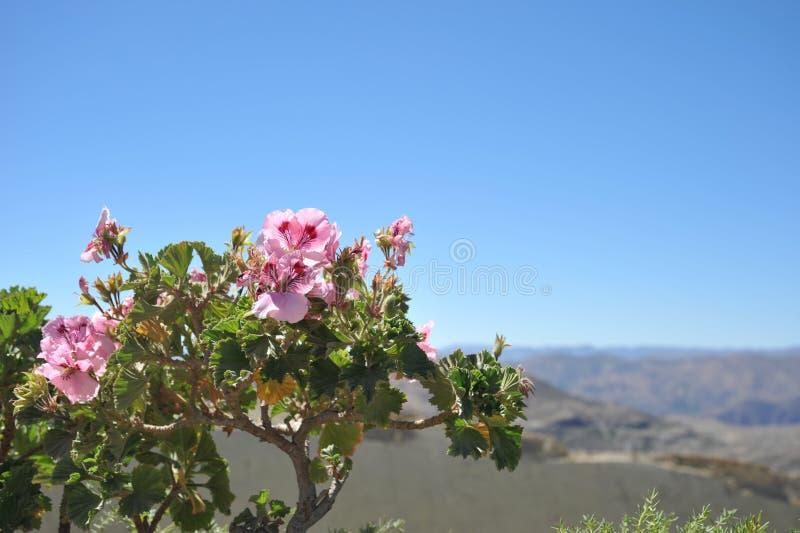 Altiplano 流星锤 库存图片