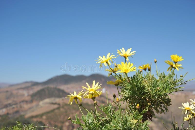 Altiplano 流星锤 库存照片