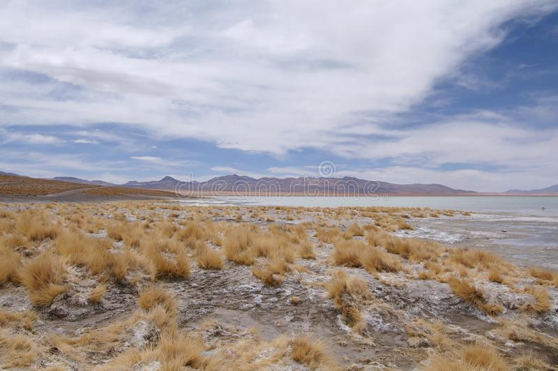 Altiplano 免版税库存图片