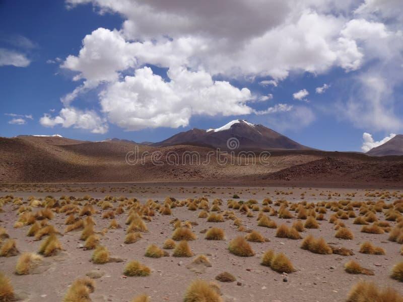 Altiplano de Bolívia foto de stock