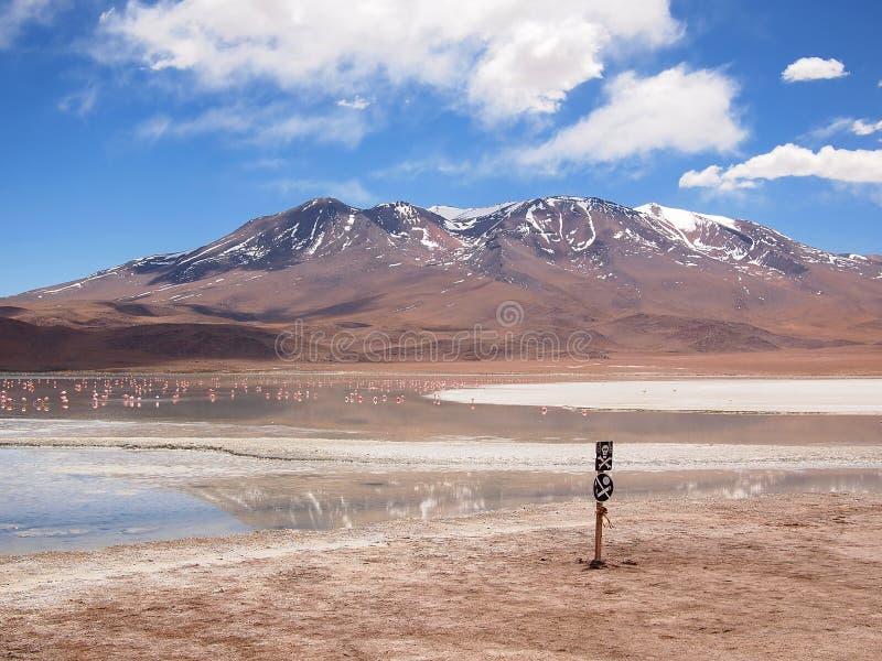 Altiplano landscape royalty free stock photos