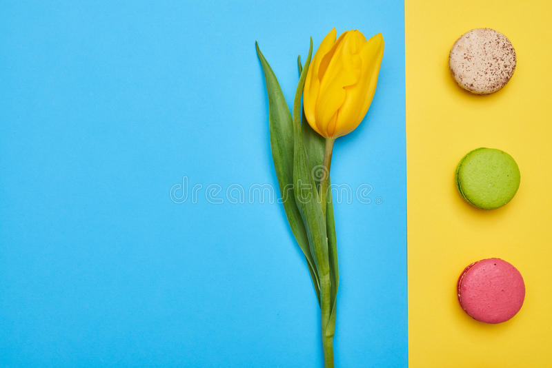Alto ángulo del solo tulipán amarillo con una línea de macarrones foto de archivo libre de regalías