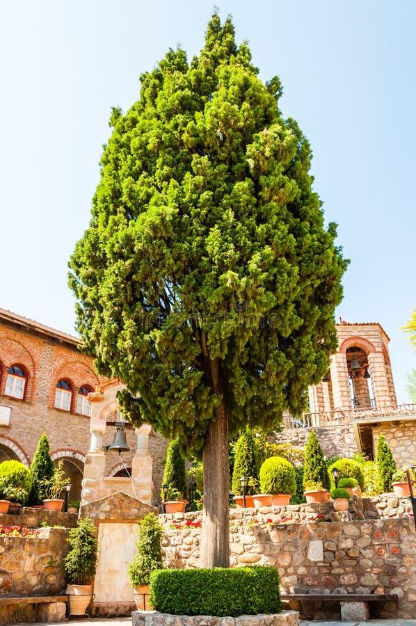 Alto árbol de pino creciente dentro del patio del gran monasterio de Meteoron por completo de las flores, plantas, pequeños campa fotografía de archivo libre de regalías
