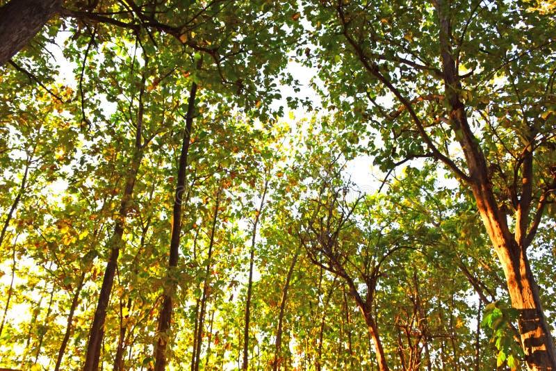 Alto adiantado da árvore do outono alinhado no jardim imagens de stock royalty free