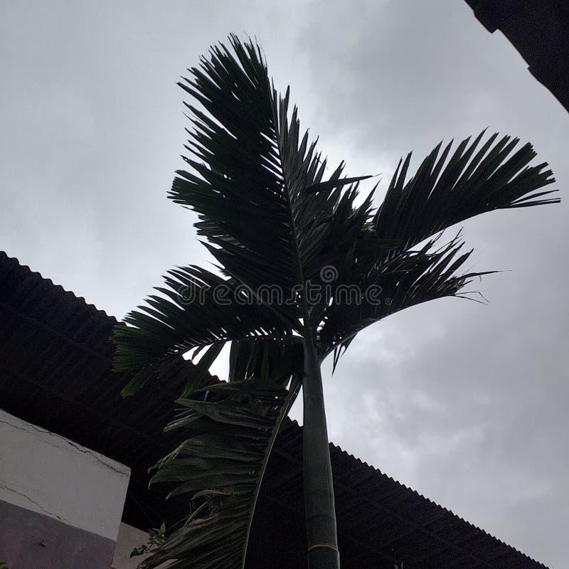 Alto albero immagine stock