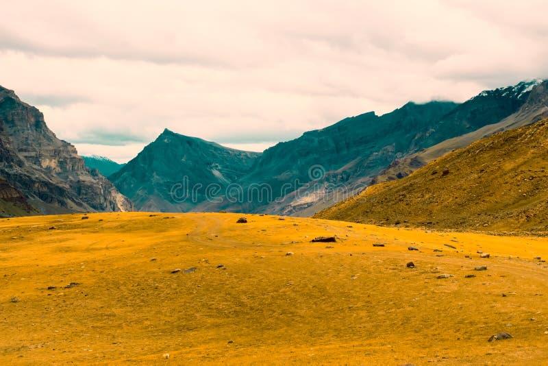 Alto amarillo hermoso del prado en las montañas foto de archivo libre de regalías