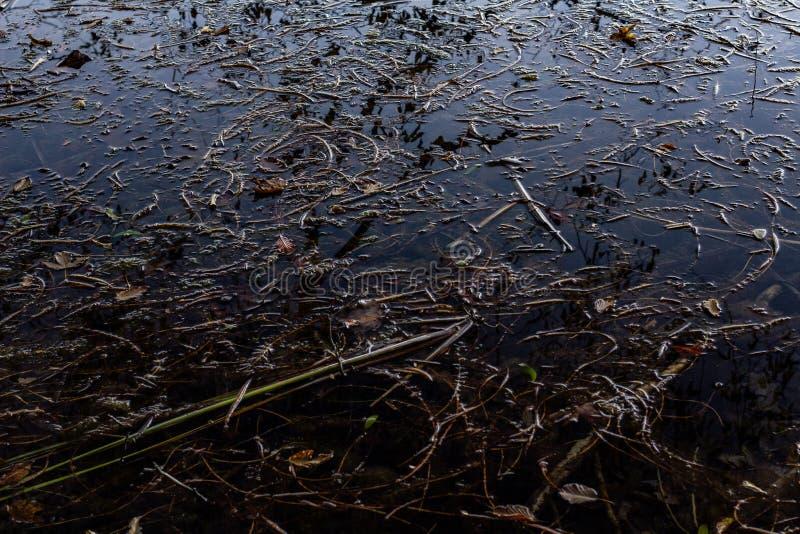 Alto angolo del lago Plitvice in Croazia contaminato da rami di piante immagine stock libera da diritti