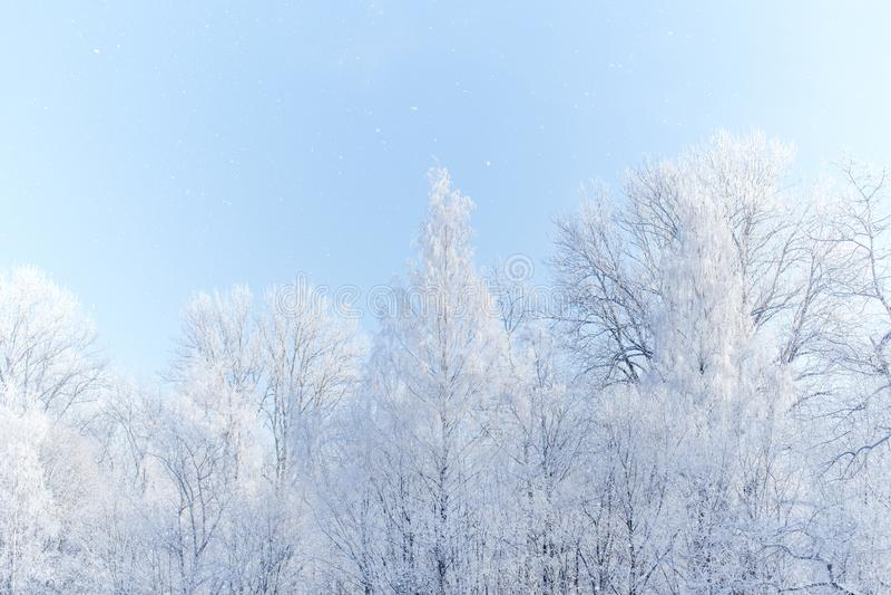 Alto bosque dominante del invierno foto de archivo libre de regalías