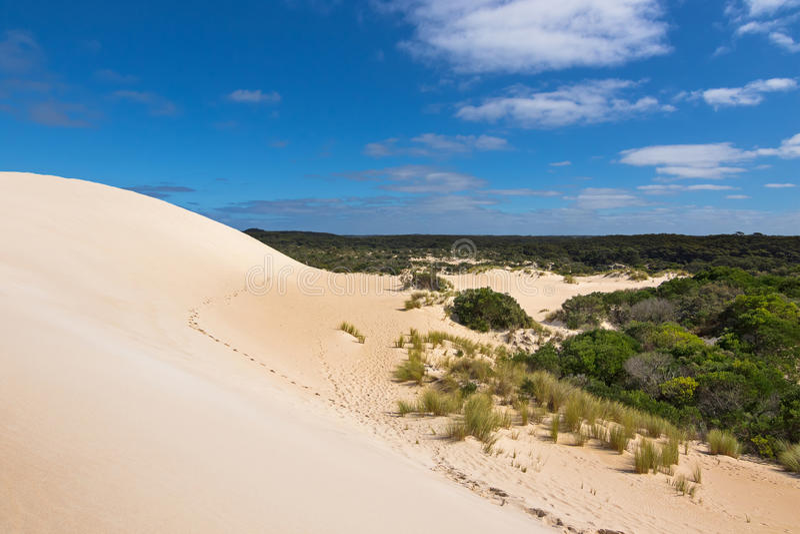 Alto canto de la colina de la arena y plantas tolerantes de la sequía con el cielo azul a imagen de archivo libre de regalías