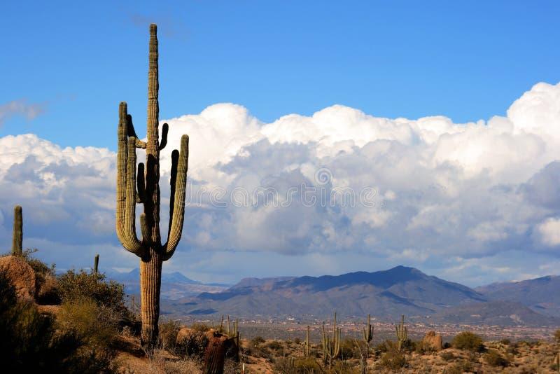 Alto desierto con el cacto, las montañas y las nubes fotografía de archivo