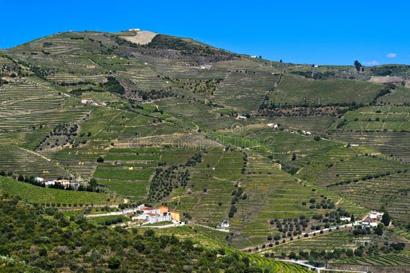 Alto Douro Vineyards photographie stock libre de droits