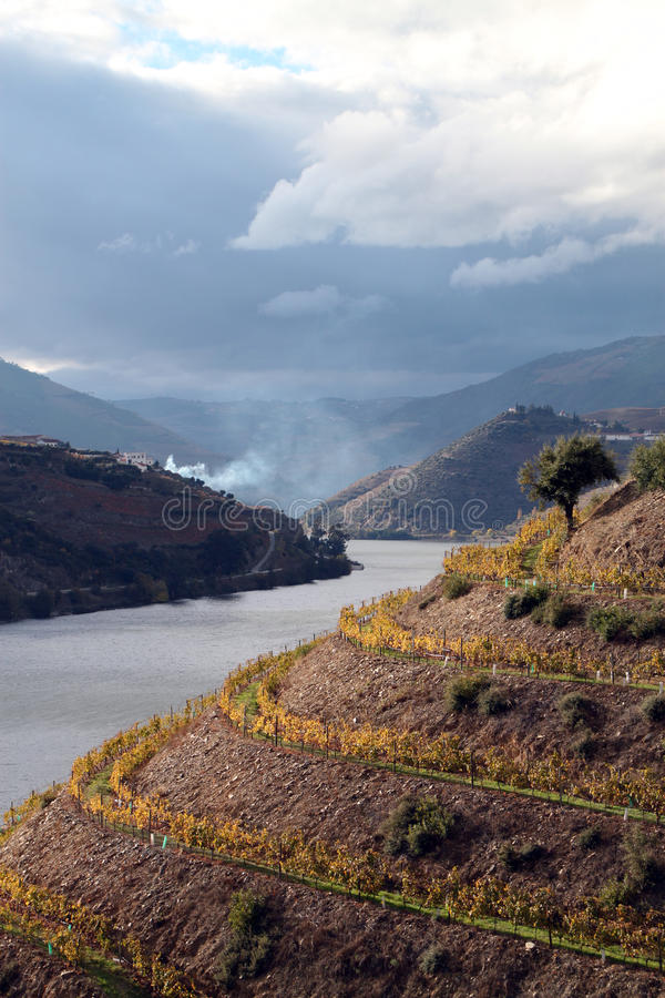 Free Alto Douro Wine Region Royalty Free Stock Photo - 16994005