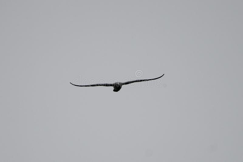 Alto gabbiano volante 4 fotografia stock libera da diritti