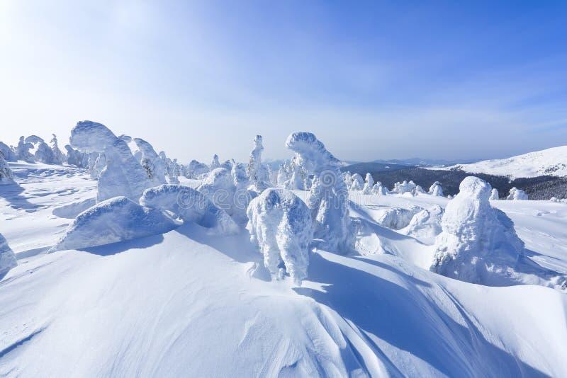 Alto nas montanhas, nas árvores do suporte do gramado cobertas com a neve, que olham como esculturas de gelo Formulários Textured fotos de stock royalty free