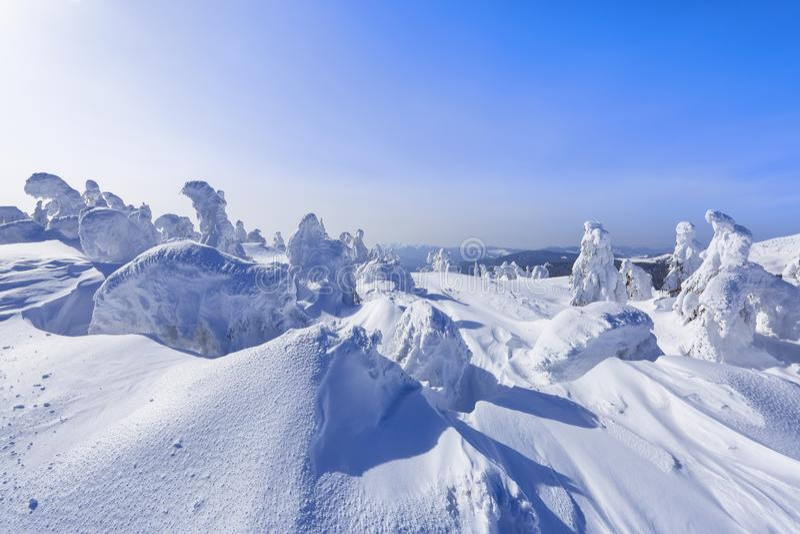 Alto nas montanhas, nas árvores do suporte do gramado cobertas com a neve, que olham como esculturas de gelo Formulários Textured fotografia de stock