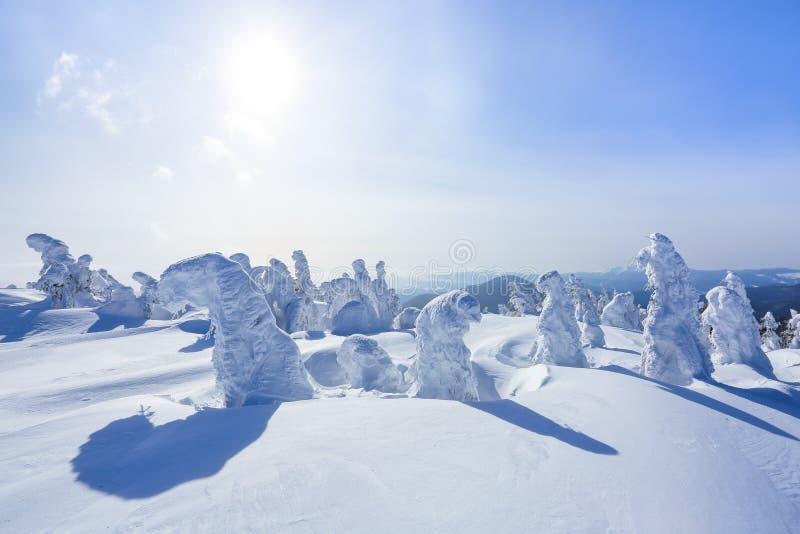 Alto nas montanhas, nas árvores do suporte do gramado cobertas com a neve, que olham como esculturas de gelo Formulários Textured fotos de stock