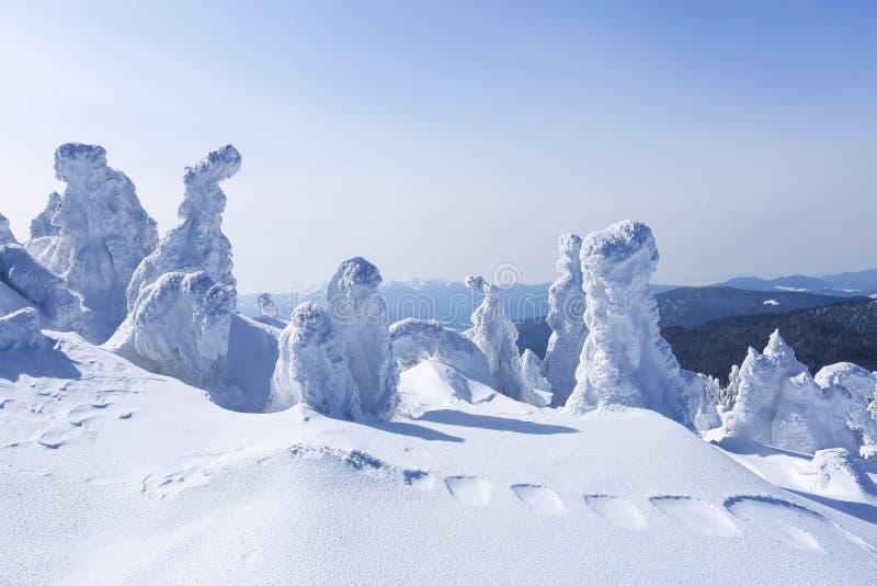 Alto nas montanhas, nas árvores do suporte do gramado cobertas com a neve, que olham como esculturas de gelo Formulários Textured foto de stock