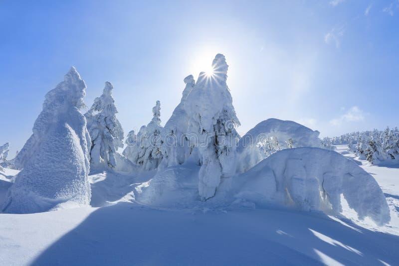 Alto nas montanhas, nas árvores do suporte do gramado cobertas com a neve, que olham como esculturas de gelo Formulários Textured imagem de stock