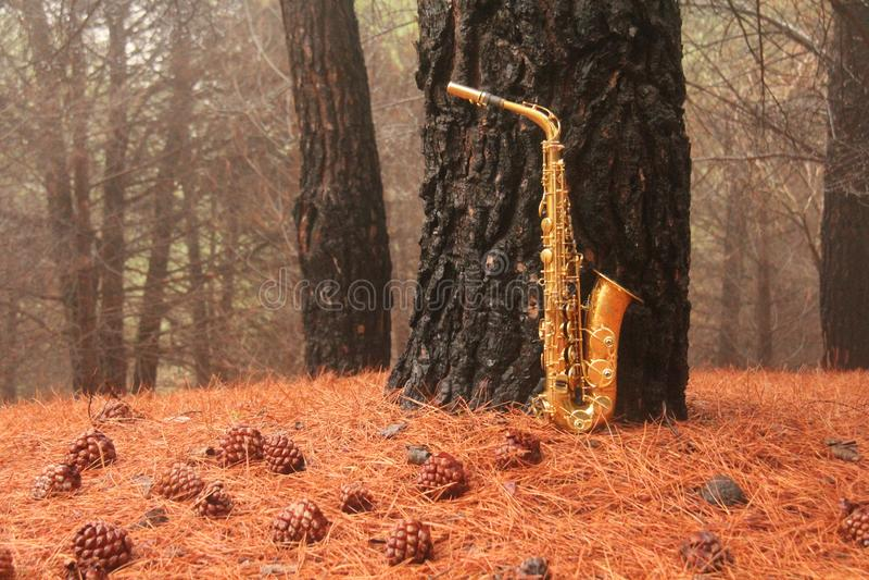 Alto Saxophone dourado na floresta no pé de Monte Etna A ilha de Sicília, Itália Lugar para o texto cartão romântico foto de stock royalty free