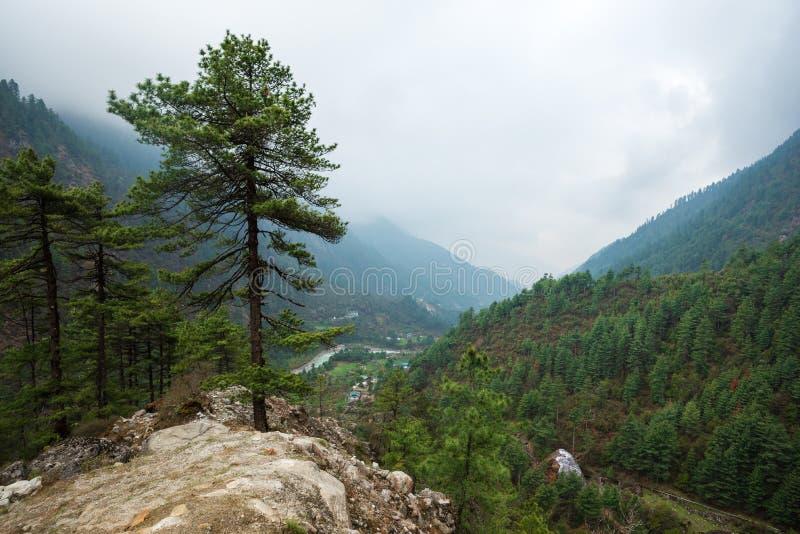 Alto solitario del pino en Nepal fotografía de archivo libre de regalías
