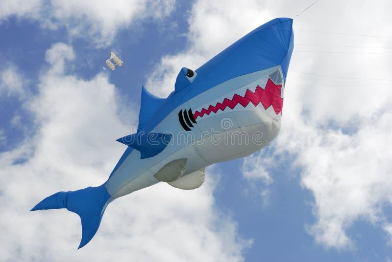 alto squalo del cervo volante in su immagini stock