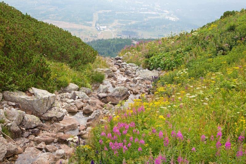 Alto Tatras - guardi dal lago della montagna di pleso di Skalnate fotografie stock